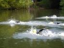 Celler Triathlon 2016 - Schwimmen_1